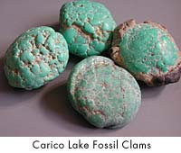 Carico Lake Fossil Clams